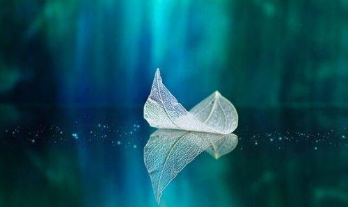 Blad flyder ovenpå vand