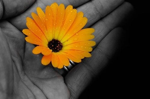 En gul blomst i en farveløs hånd. Et billed på en modstandsdygtig personlighed.