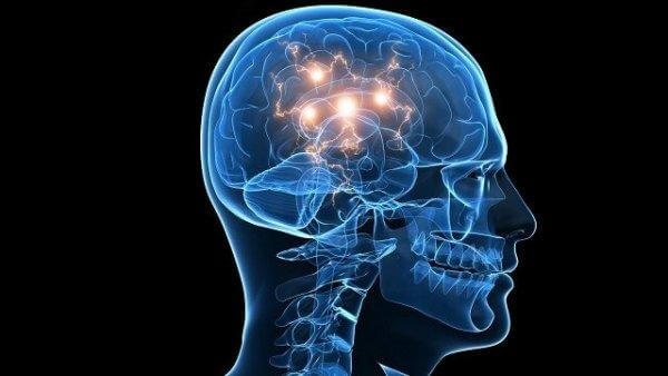 Tiltrækning til risiko er forbundet med hjernens dopaminproduktion