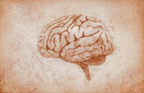 En tegnet hjerne