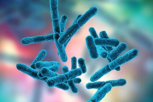 Bakterier og det enteriske nervesystem