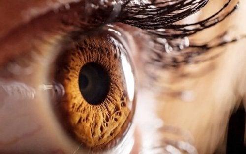 Nærbillede af brunt øje