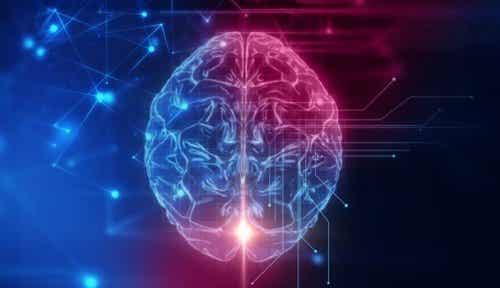 Det orbitofrontale cortex: Basen for social adfærd