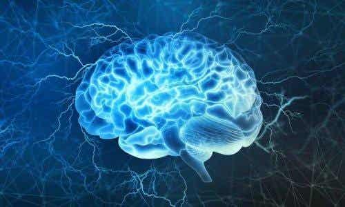 Det præfrontale cortex: En af de mest interessante dele af hjernen