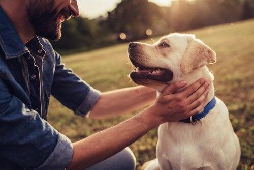 Fortællinger om hunde, der blev berømte