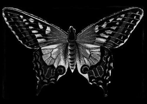 sort sommerfugl