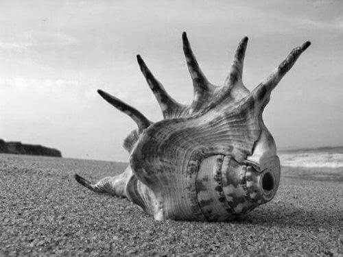 En konkylie på strand