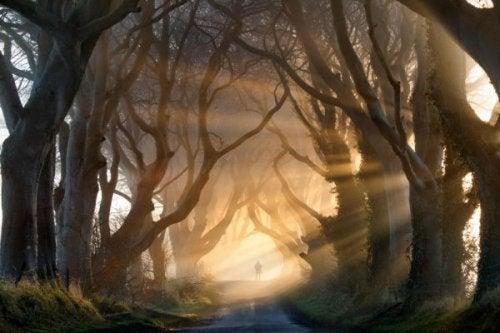 person i en skov symboliserer skrækfilmen i ens hoved