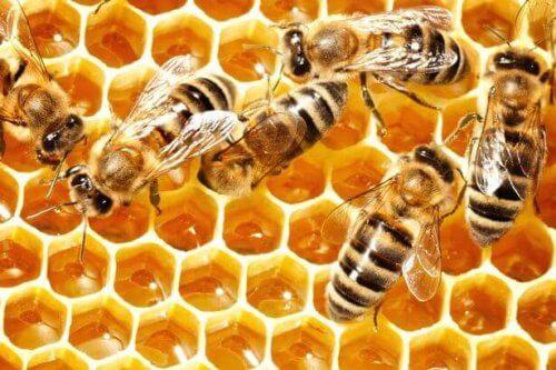 I biernes verden kan man aldrig tale i ental. Selvom de alle bidrager individuelt, går det til et fælles formål