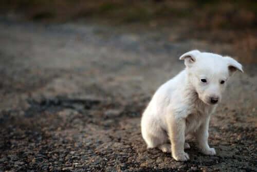 En hund, som er trist, illustrerer dyrs bevidsthed