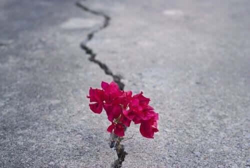 Blomst er vokset op gennem revne i asfalt