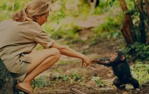 Jane Goodall med chimpanseunge
