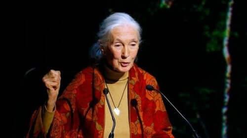 Som 84-årig har Jane Goodall stadig sin karakteristiske hestehale og det fredfyldte smil og følsomme blik, der observerer verden med en nærmest barnlig nysgerrighed.