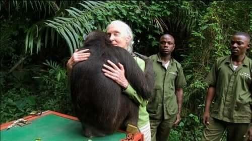 Jane Goodall krammer chimpanse
