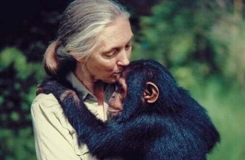 5 citater af Jane Goodall til at reflektere over