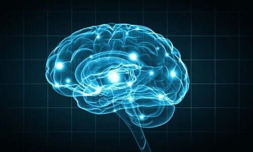 en hjerne i blåt lys