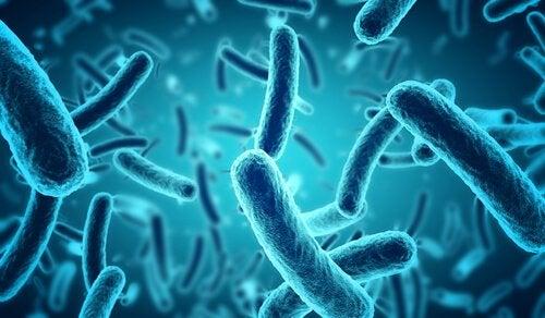 Forskere har sagt, at bakterierne kan have gået gennem tarmnerverne, blod-hjerne-barrieren eller næsen