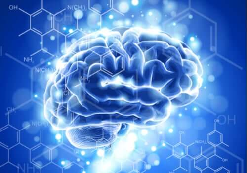 Neuroetik: Egenskaber og udvikling
