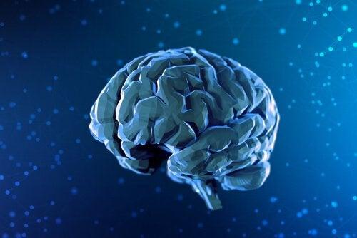 En digital illustration af hjernen symboliserer neurovidenskab