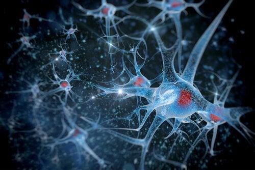 forskning i biopsykologi