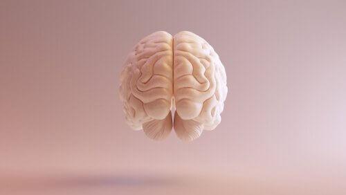 Et billede af en hjerne