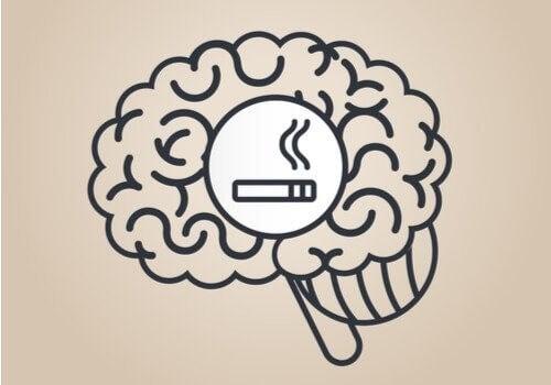 Nikotin: Hvordan påvirker det hjernen?