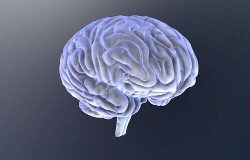 Illustration af hjerne