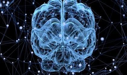 Sover hjernen egentlig nogensinde?