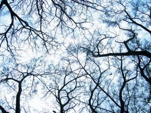 Dendritter: Starten på en neurovidenskabelig revolution