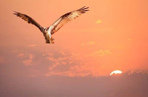 En fortælling om identitet: Fuglen uvist om sin identitet