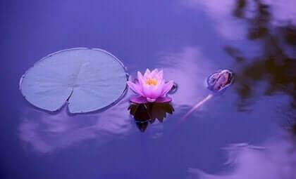 blomst i sø