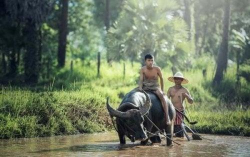 Ung mand hjælper far i marken