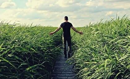 mand, der går på en sti omgivet af højt græs