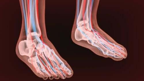 nervebaner i ben og fødder