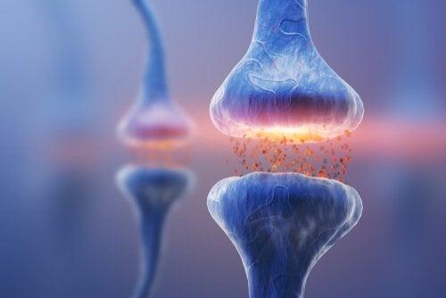 Typer af synapser: Neural kommunikation