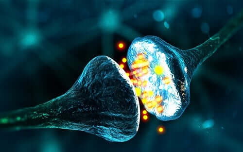 Forskellige synapser fungerer på forskellige måder
