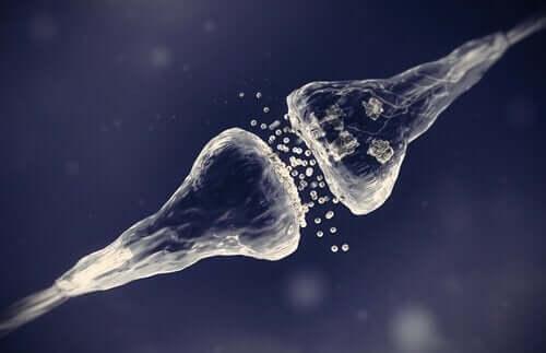 De forskellige typer af synapser har bestemte processer
