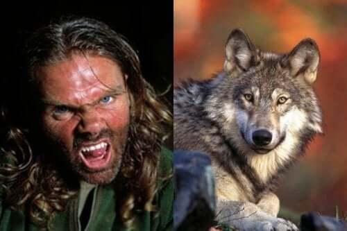 Ellis ligner en ulv