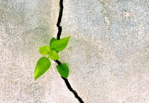 Lille plantespire vokser gennem beton som symbol på modstandsdygtighed ifølge Marcelo Ceberio