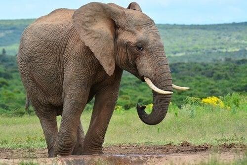 Historien om elefanten og de seks blinde vismænd lærer os at værdsætte andres meninger