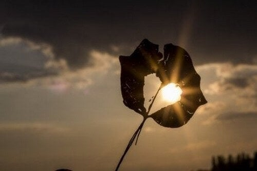 Blad med hul formet som hjerte foran sol
