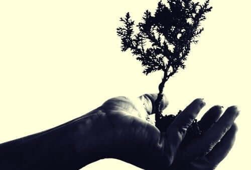 en hånd med et lille træ