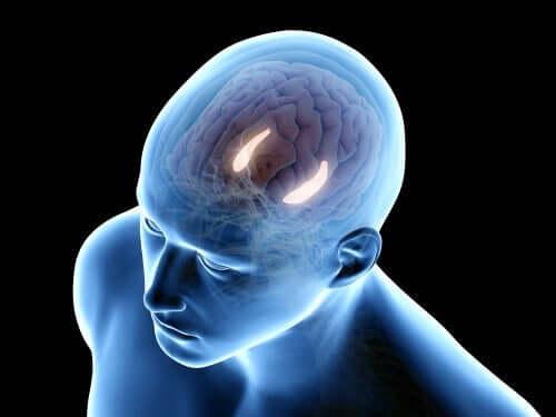 Hippocampus lyser op i en hjerne