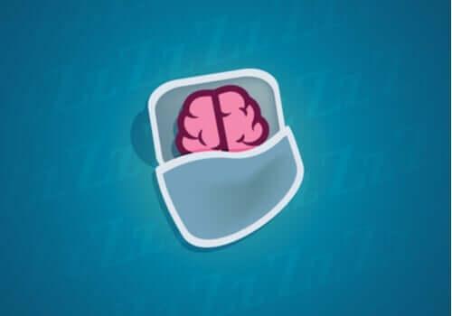 Hvad sker der med vores neuroner under søvn?