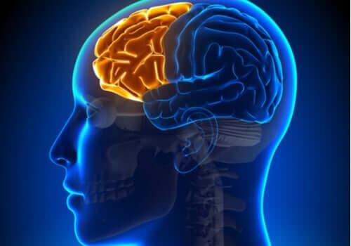 Dyseksekutivt syndrom: Når frontallappen fejler