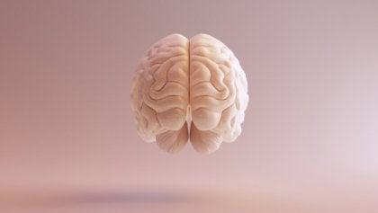 Hjernen fra et menneske