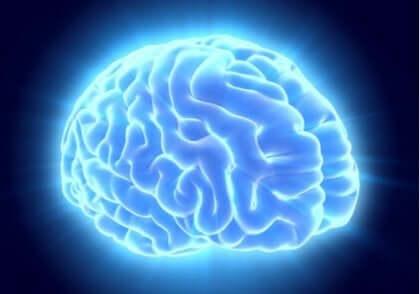 en hjerne, der stråler