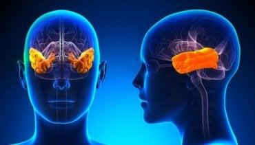 Klüver Bucy syndrom: Mangel på frygt