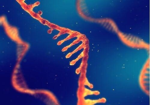 Kan man arve viden: Et digitalt billede, der viser RNA-strenge