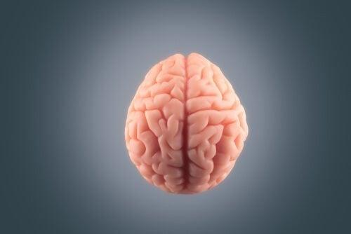Hjerne på en grå baggrund